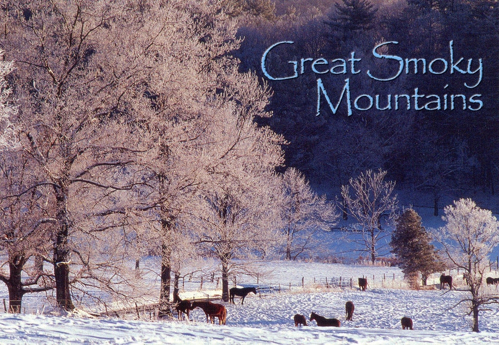 Cades Cove Winter with Animals