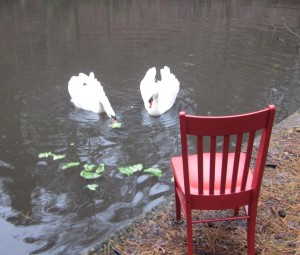 The Red Chair Feeds the Swans 010