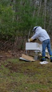 Honey bee hives add to our landscape at Buckhorn Inn.