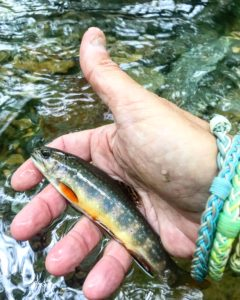 The trout here make the Park one of the country's most popular fishing destinations.