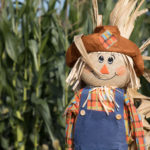 The current world record is 3,812 scarecrows all in one display.