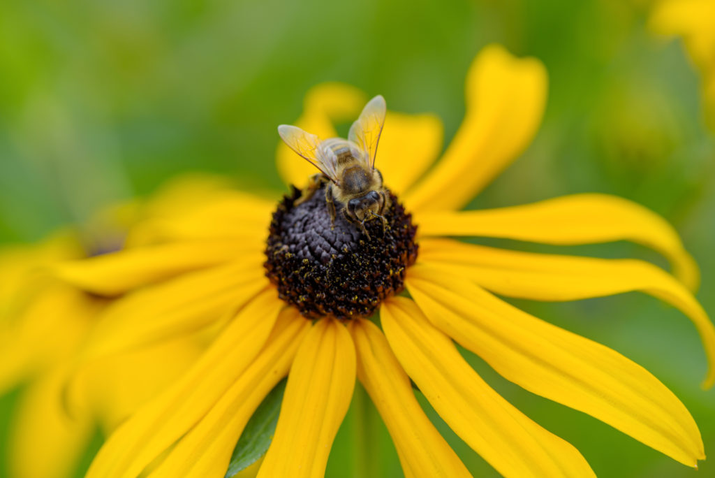 Wildflowers attract pollinators.