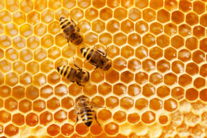 Honey bees worked all summer to build honey stores.