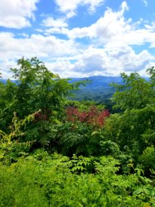 The Foothills Parkway offers breathtaking views in all seasons.